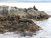 Seals in the Beagle Channel near Ushuia, Argentina - The End of the World.