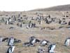 Penguins.  They don't.  These are in Chile.